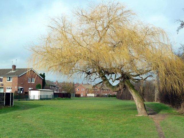 Winter tree in Honeywell