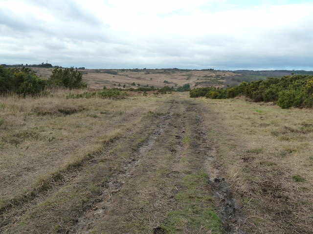 Vanguard Way stretching across the open heathland of Ashdown Forest