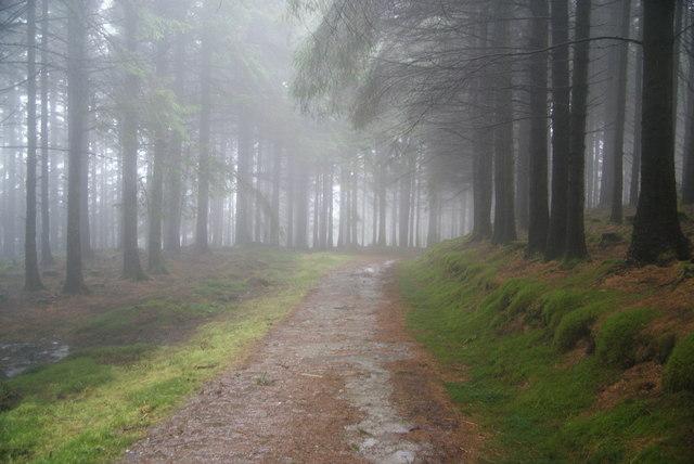 Woodland track on Llechwedd Gwinau