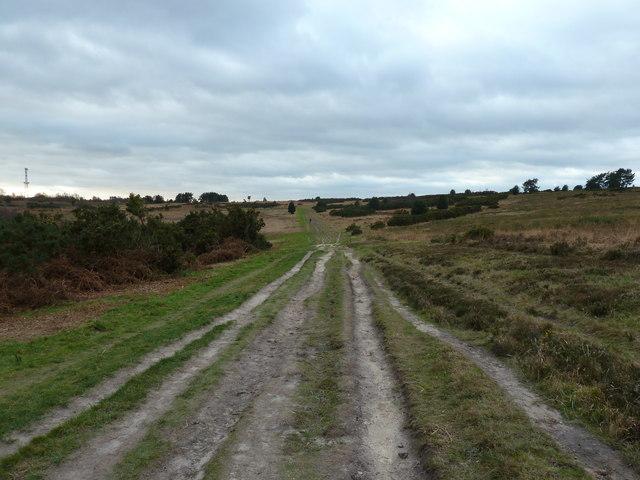 Track across Ashdown Forest