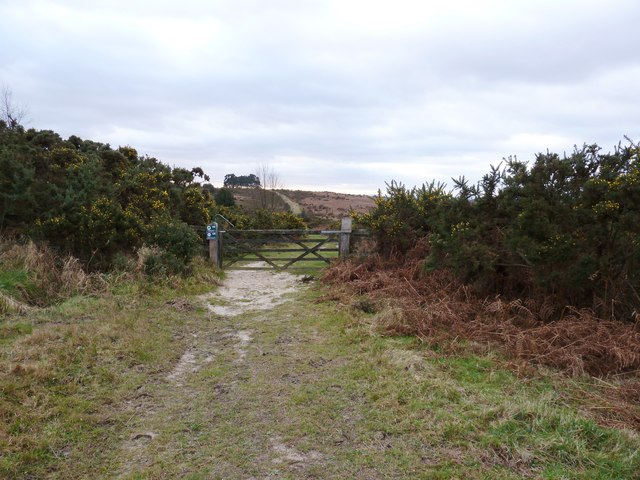 Gateway onto the Ashdown Forest from the B2026