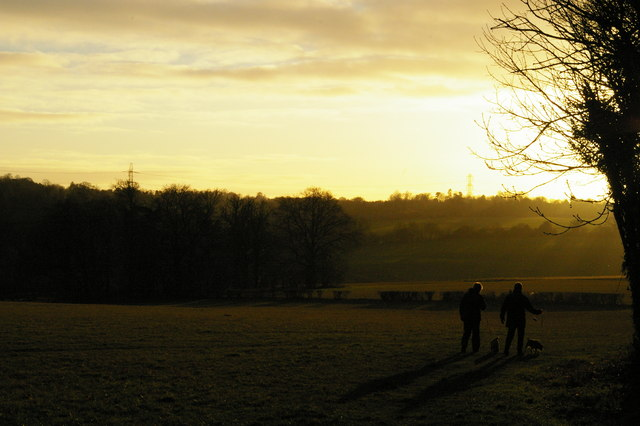 Dog-walkers, late afternoon winter light, Farnborough