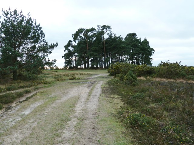 Camp Hill Clump on Ashdown Forest
