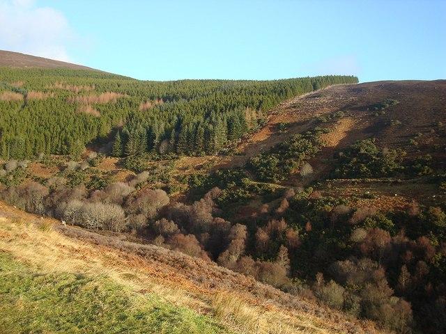 Forestry Near Kildonan