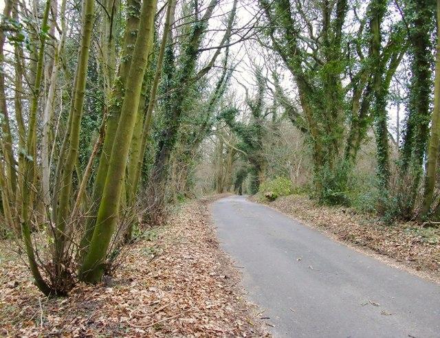 Hogden Lane, north of Stonyrock Cottage