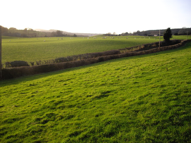 Pastureland and sheep, near Rhiwderin
