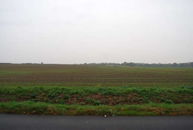 Farmland by Chestfield Rd