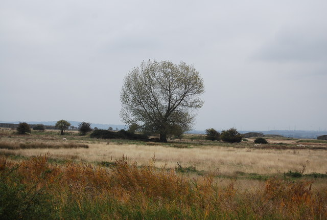 A tree on Cliffe Marshes