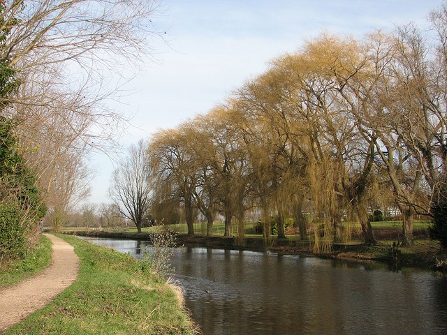 Horningsea: riverside willows
