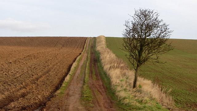 Farm track above Eymouth