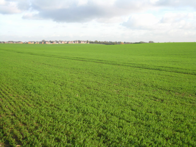 Giddings Field (106 acres)