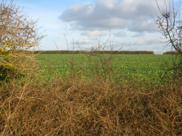 Looking into White Borough field (41 acres)