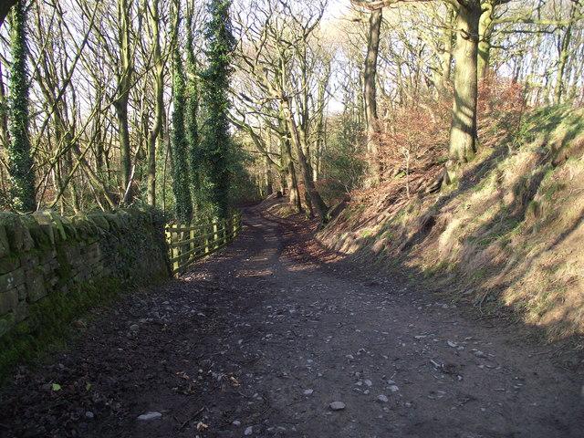 Woodland track near Yarrow reservoir