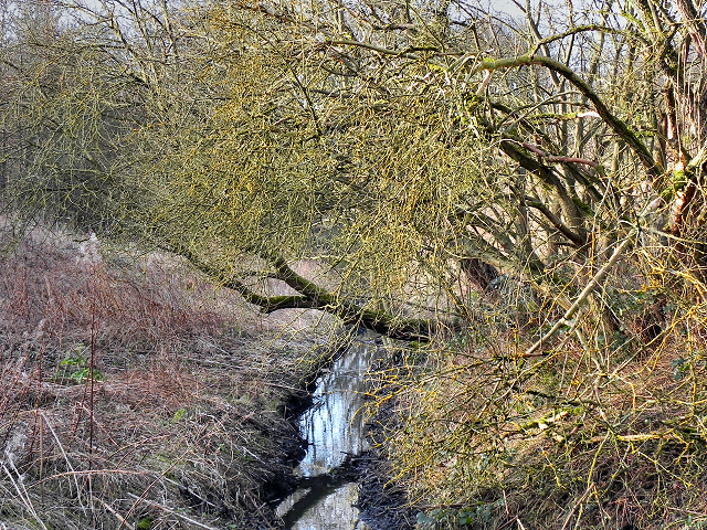 Kickety Brook