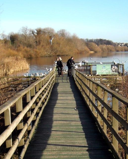 The Duck Walk Fairburn Ings