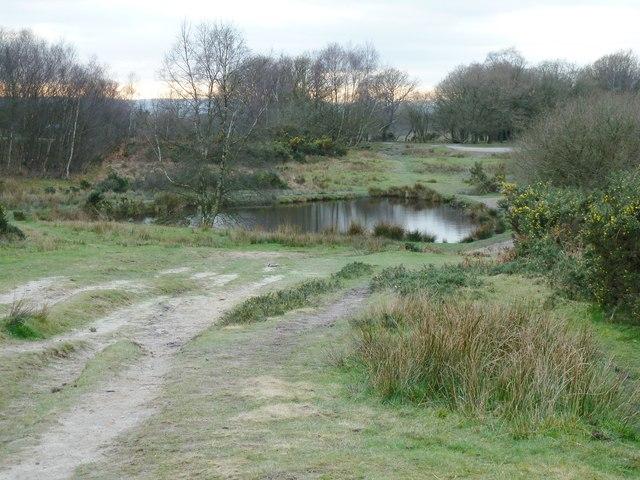 Ellison's Pond