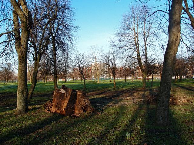 Tree Stump, Kings Drive, Glasgow