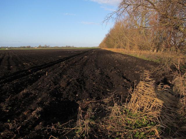 Dark Fenland soil