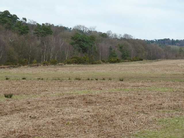 Woodland on the edge of Ashdown Forest