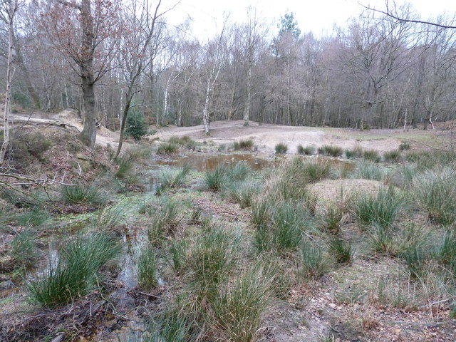 Pool in Ashdown Forest