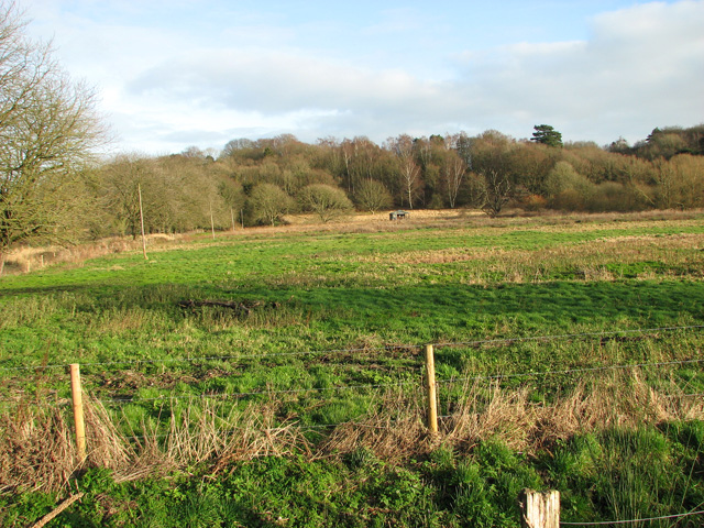 Woodland by Wensum Lodge, Bintree
