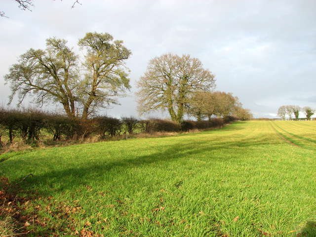 Bare trees and field boundary hedge