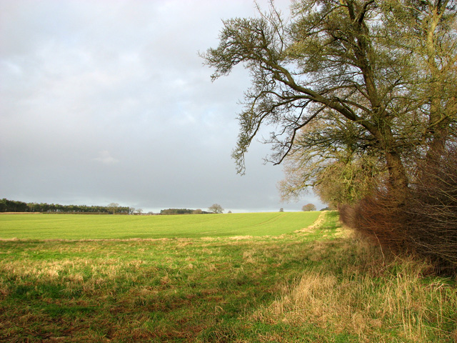 Field boundary north of the B1145