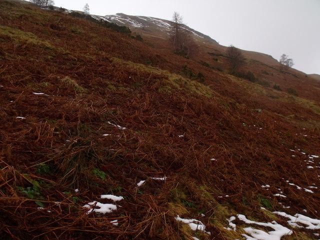 Southern slopes of Carn Gorm in Glen Lyon