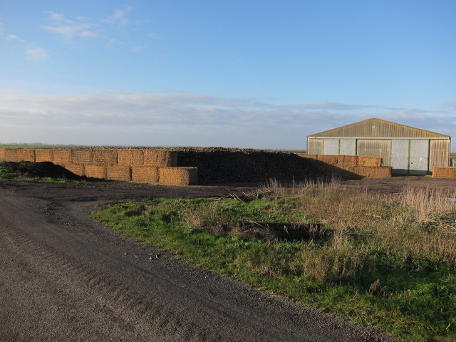 Sugar beet at Poppylot Farm