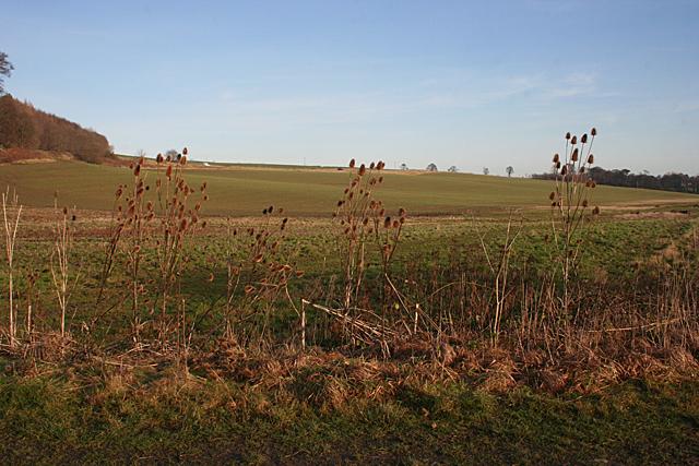 Fields near Clove Craig