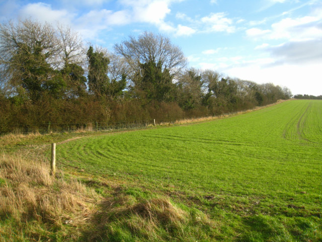 Field boundary - Cottington's Hill