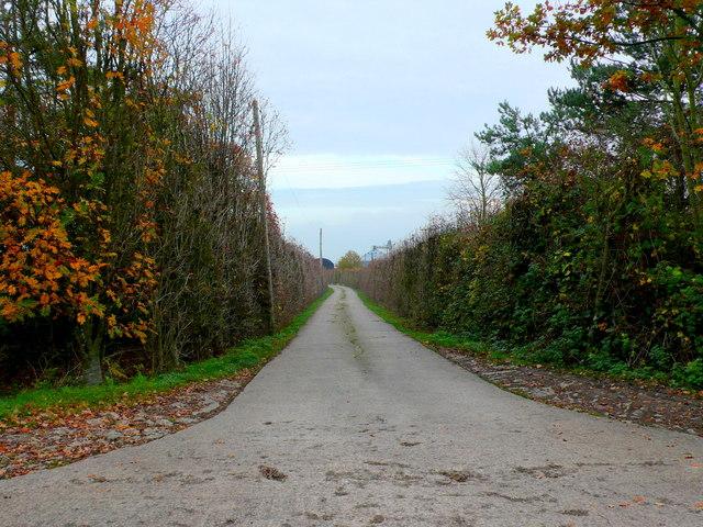 Track to Bickmarsh Lodge