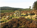 NO8192 : Cairn at the edge of Strathgyle Wood by George Wilson