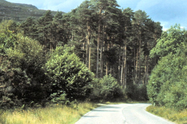 Dundonnel Forest - 1981