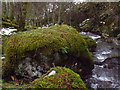 NN6148 : Mossy boulder by Allt Bhrachain above Camusvrachan in Glen Lyon by ian shiell
