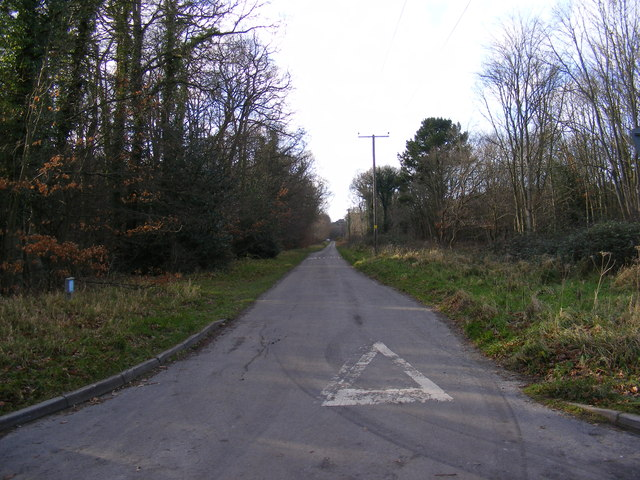 Road at St.Helena, Dunwich Forest