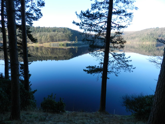 Upper Derwent Reservoir; conifers