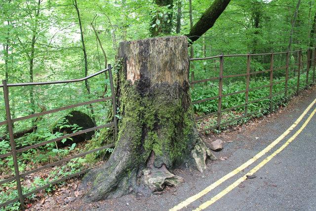 Money Tree, Ambleside, Cumbria
