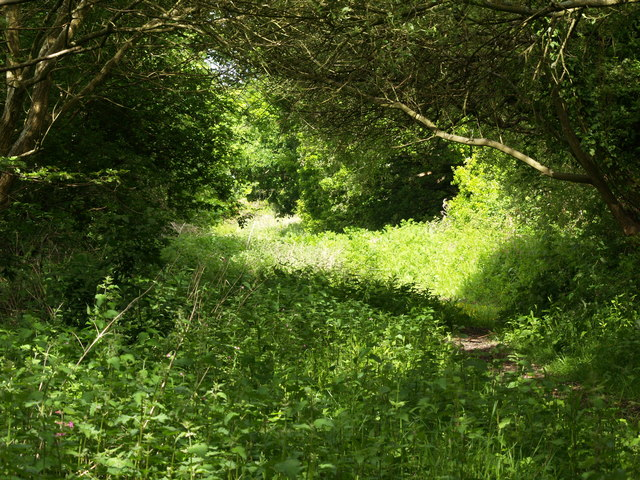 Footpath from Paulett's Lane to Shorn Hill