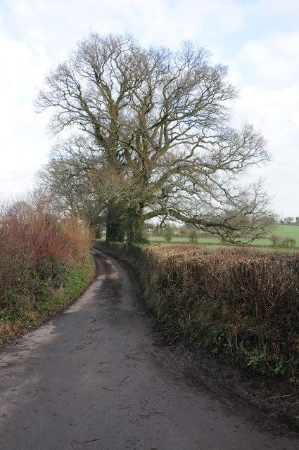 Country road near Llanddewi Rhydderch