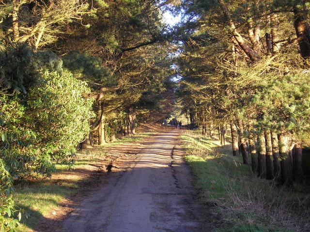 Hurstwood woods