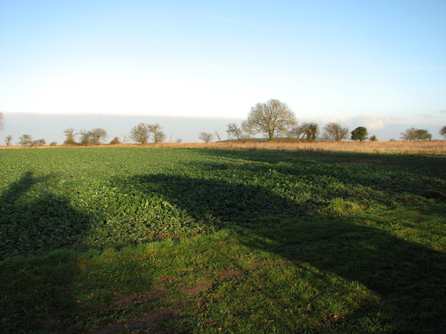 Trees growing on field boundary, Swaffham