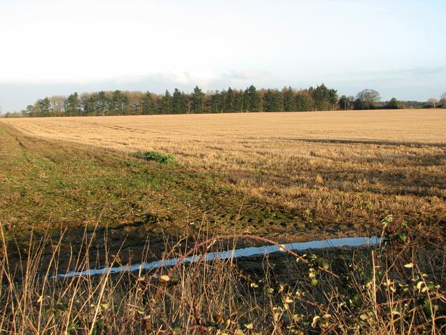 Unnamed woodland west of Swaffham