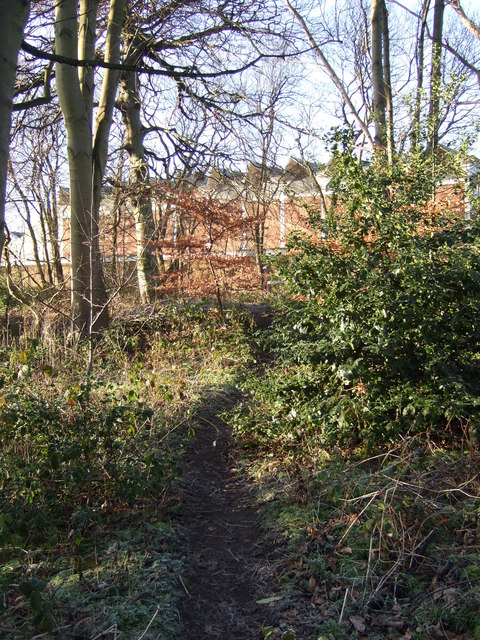 Path through woodland near the university