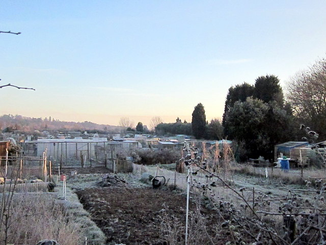 Perdiswell Allotments, Frosty January