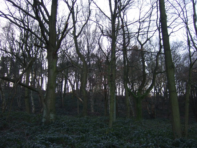 Woodland beside the A6120