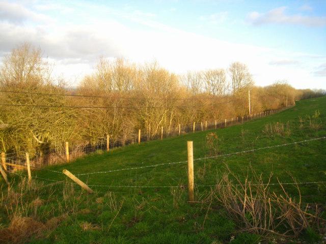 Field corner - Cottington's Hill