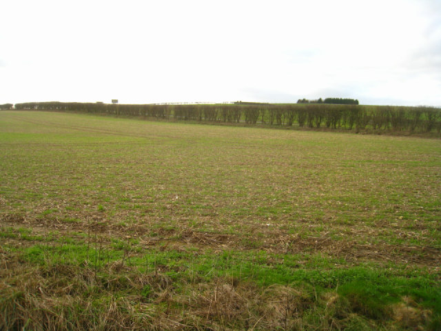 Arable land - Stubbington Down