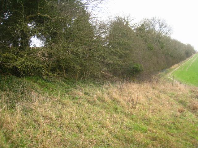 Hedge on Stubbington Down