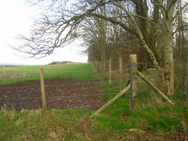 Fenced woodland - Cottington's Hill